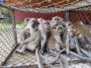 กรมอุทยานฯ เปิดคำพิพากษาแก๊งค้าลิงแสมข้ามชาติ โดนคุก 1 ปี 6 เดือน