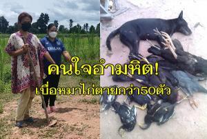 แทบช็อก! หมาไก่เลี้ยงไว้ถูกคนใจร้ายวางยาเบื่อตายกว่า 50 ตัว ไม่แจ้งความขอให้เวรกรรมลงโทษ