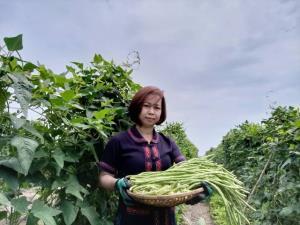 """สาว อบต.ต่อยอดพืชผลดำเนินสะดวก ติดแบรนด์ """"PIN"""" ฝ่าโควิด-19 ขายทั้งใน-ต่างประเทศ 6 หลักต่อเดือน"""