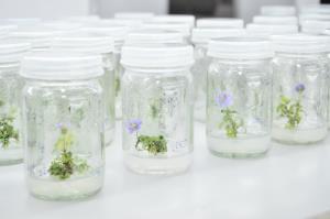 กรมวิทย์ จับมือ ม.เกษตรศาสตร์ ร่วมวิจัยสมุนไพรและพืชเสพติด เพื่อประโยชน์ทางการแพทย์