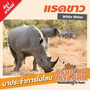 """""""แรดขาว"""" และ 5 สัตว์สมาชิกใหม่ เตรียมโชว์ตัวที่สวนสัตว์สนามบินสุโขทัย เริ่ม 25 ก.ย. นี้"""
