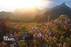 """ละลานตาดอกไม้ป่าเฉพาะถิ่น แห่ง """"ดอยเชียงดาว"""" พื้นที่สงวนชีวมณฑลแห่งใหม่ของโลก"""