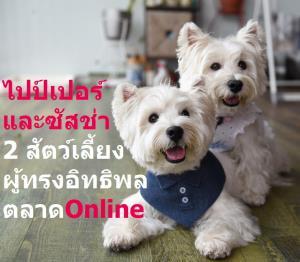 ซัสช่า กับ ไปป์เปอร์ สองน้อนหมาเวสต์ ไฮแลนด์ ไวท์ เทอร์เรีย ระดับเซเลบของสิงคโปร์ เป็นสัตว์เลี้ยงผู้ทรงอิทธิพล (Pet Influencers) ต่อการซื้อสินค้าบนแพลตฟอร์มออนไลน์ มีผู้คนหลงใหลรักใคร่ในความจิ้มลิ้มน่ากอดของพวกเขากันอย่างมากมาย โดยมีแฟนคลับติดตามอินสตาแกรม แอคเคาน์ Lomodoggies สูงถึง 24,400 ราย ส่งผลให้งานโฆษณาหลั่งไหลเข้าไปมากมาย สามารถทำรายได้ให้แก่มามี้แคร์รี่ เอ้อร์ รวมหลายแสนบาทแล้ว
