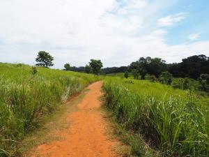 ้เส้นทางเดินแบบธรรมชาติสู่หอดูสัตว์หนองผักชี (ภาพโดย Juntimar Mongkhuntod จากคอมเมนต์ในเพจที่นี่เขาใหญ่)