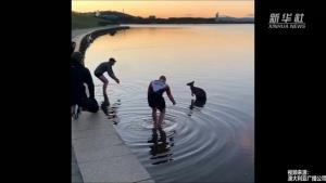 """น่าชื่นชม! ชายออสเตรเลียช่วยชีวิต """"จิงโจ้"""" ยืนสั่นกลางทะเลสาบ"""