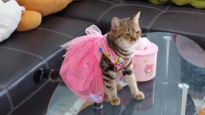 """สินค้ารุมตอม """"บ่งบ้ง"""" แมวแม่ค้าสุดฮอตในโลกโซเชียล รับงานรีวิวสินค้า 3 ตัว/วัน"""