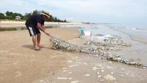 หาดชะอำเกิดปรากฏการณ์น้ำเบียด สัตว์ทะเลน็อกน้ำเกลื่อนหาด
