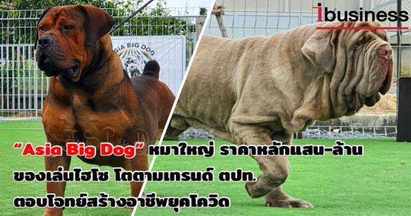 """(ชมคลิป)Asia Big Dog """"หมาใหญ่"""" ราคาหลักแสน หลักล้าน ของเล่นไฮโซ เติบโตตามเทรนด์ตปท.ตอบโจทย์สร้างอาชีพในยุคโควิด"""