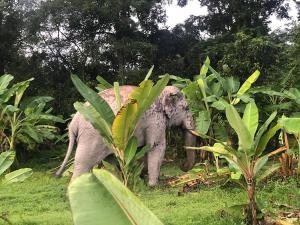 """พลายสาริกา อินเทรนด์! """"ทำตัวด่าง ในดงกล้วย"""" ฉายเดี่ยวทำภารกิจบ-ว-ร นอกเขตป่า"""