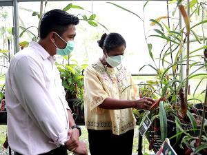 """นักพืชศาสตร์ ม.วลัยลักษณ์ ค้นพบ """"หม้อข้าวหม้อแกงลิง"""" 2 ชนิดใหม่ของโลกกลางป่ากระบี่-นครศรีฯ"""