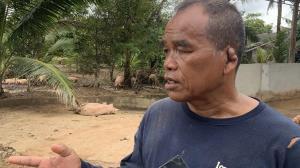 เจ้าของฟาร์มหมูใน จ.ตราด และจันทบุรีเร่งขนย้ายหมูออกจากพื้นที่หลังยังมีน้ำท่วมขัง