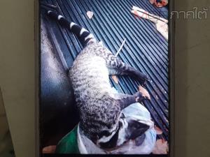 ตำรวจ ปทส. ร่วมกับ ตชด. บุกจับหนุ่มวัย 28 ปี พร้อมสัตว์ป่าคุ้มครอง ยาบ้าและอาวุธปืน