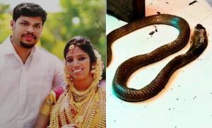 โหดจัด! หนุ่มอินเดียเช่า 'งูพิษ' กัดเมียตาย หวังฮุบทรัพย์สินแต่ง 'เมียใหม่' สุดท้ายไม่รอด