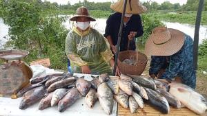 ลำน้ำชีทะลักท่วม! ชาวมหาสารคามจับปลาขายสดๆ ข้างถนน