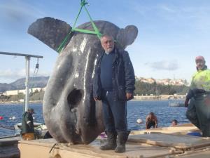 ไม่อยากเชื่อสายตา! ผู้เชี่ยวชาญอึ้ง 'ปลาแสงอาทิตย์มหึมา' ว่ายติดอวนเรือประมง (ชมคลิป)